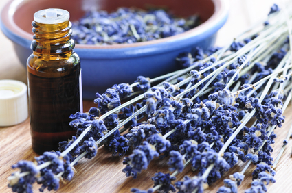 Are lavender and tea tree oil estrogenic?