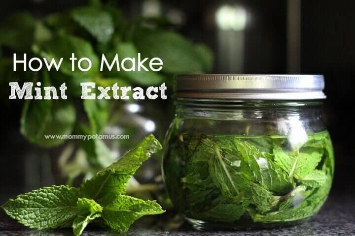 Mint Extract Recipe - Ohhh, I'm going to add a minty twist to my favorite brownies, chocolate pudding, ice cream, hot chocolate or tea! This two-ingredient mint extract recipe looks so easy.
