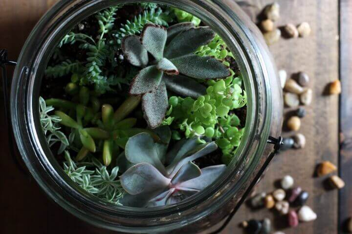 how-to-make-terrarium-top-view