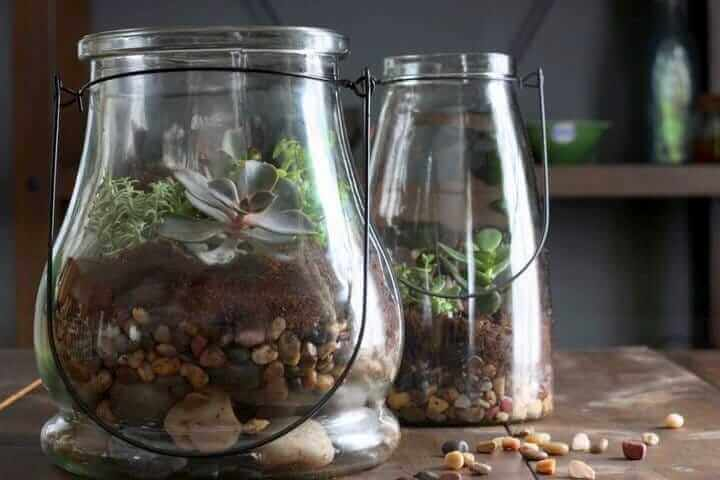 how to make a desert terrarium for kids