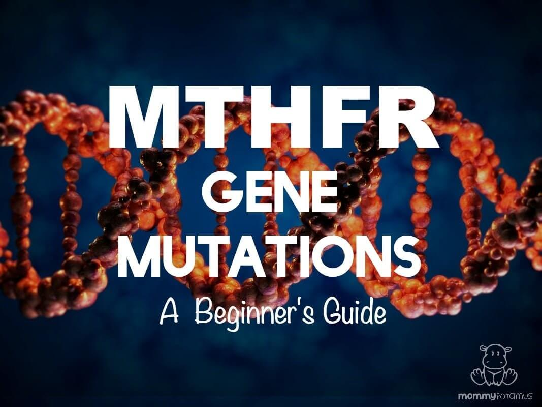What's the big deal about MTHFR gene mutations? Approximately 30-50% of our population has this genetic mutation, but most of us know very little about it. Click to find out why folic acid is toxic to people with MTHFR, how it can affect health, and what to do about it.