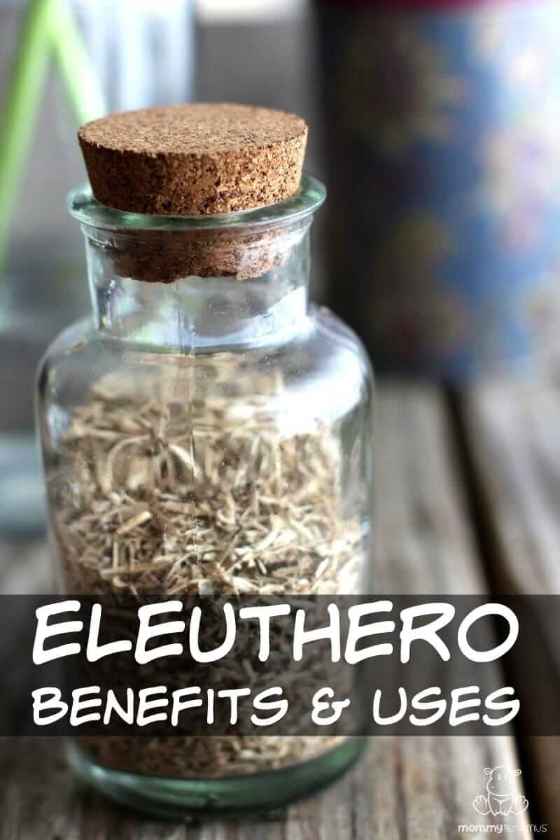 Eleuthero Benefits and Uses - It's been the subject of classified research, sent into space with astronauts to help them adapt to the stress of being in space, and is considered gentle enough for children and the elderly. Eleuthero is an adaptogen (herb that helps us adapt to stress) that research research suggests may be helpful for memory, learning, and immune support.