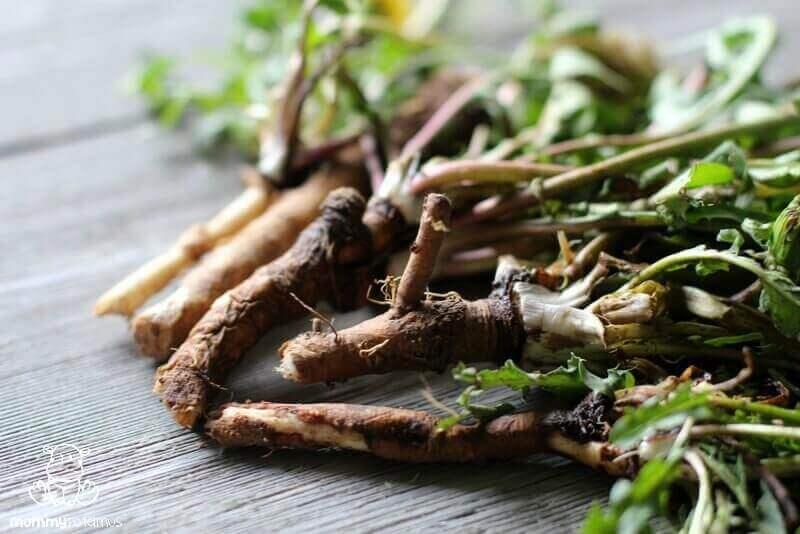 dandelion root benefits