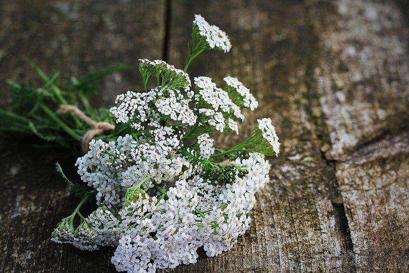 8 Yarrow Uses And Benefits (And How To Prepare It In Your Kitchen)
