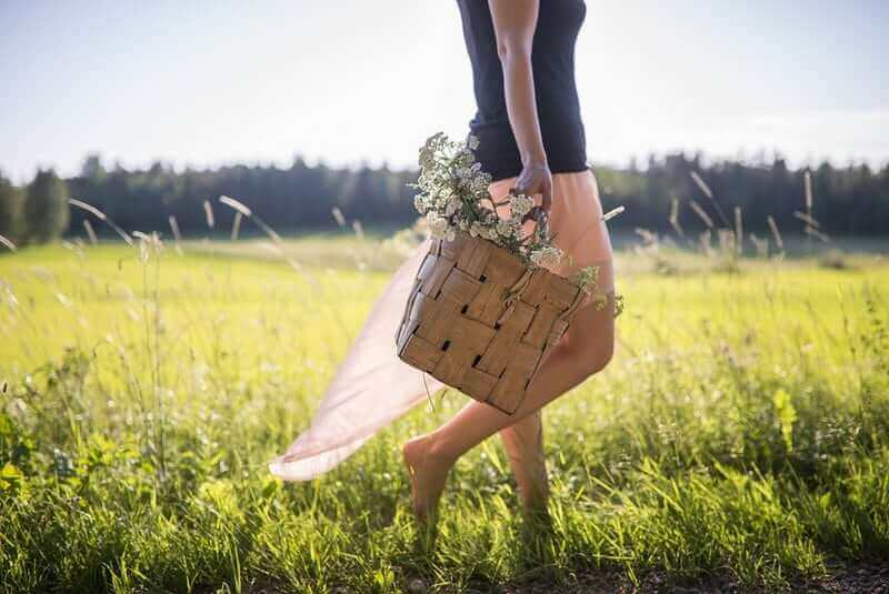 8 Benefits And Uses of Yarrow