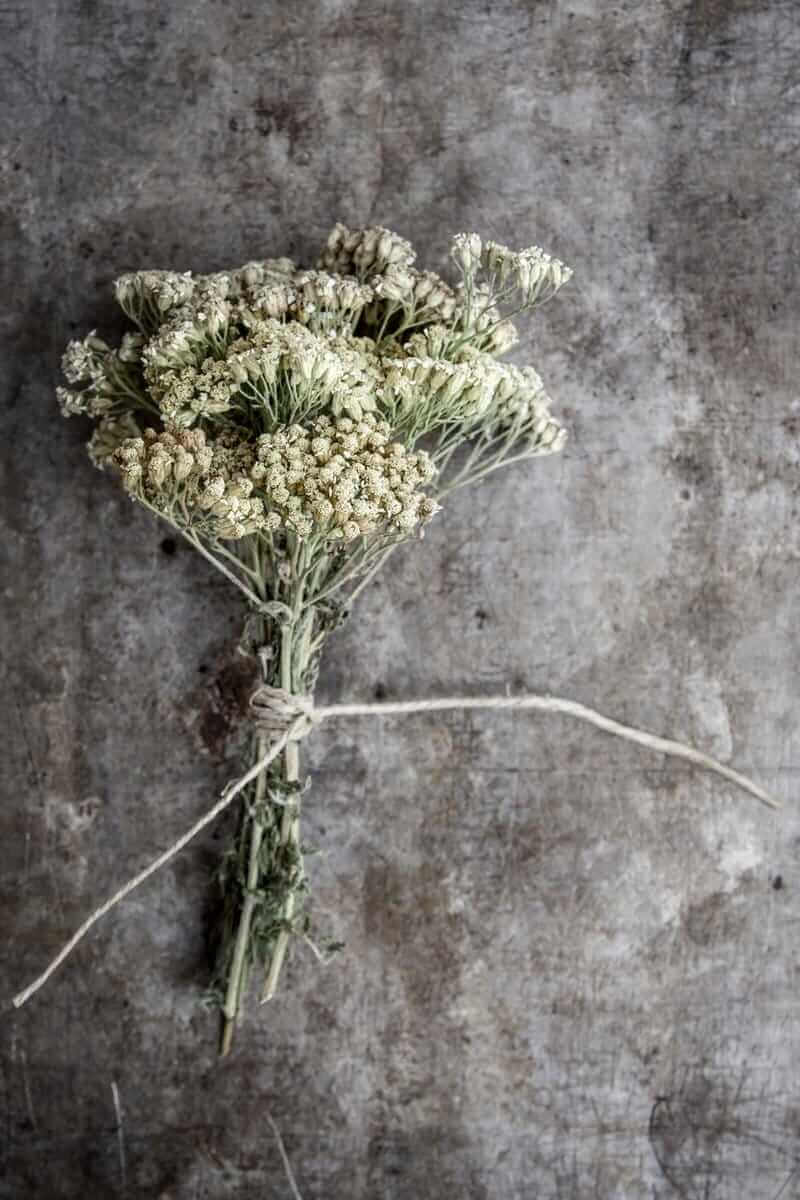 Yarrow is used internally (as a tea or tincture) to ease a fever, stimulate digestion, ease stomach issues and headaches, and more. It's also used externally for wound care and beauty applications.