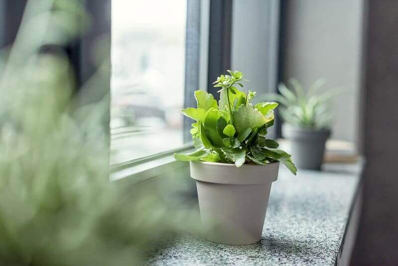 Inexpensive ways to improve indoor air quality that are backed by research