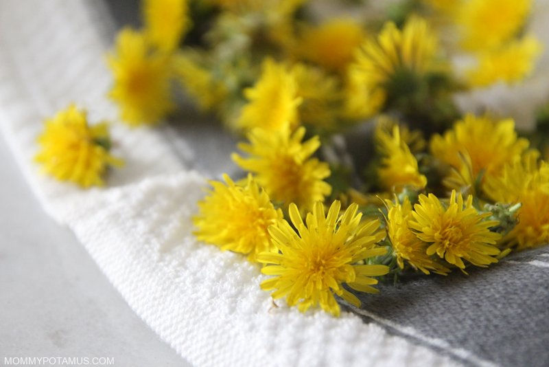 Benefits of Dandelion for Skin
