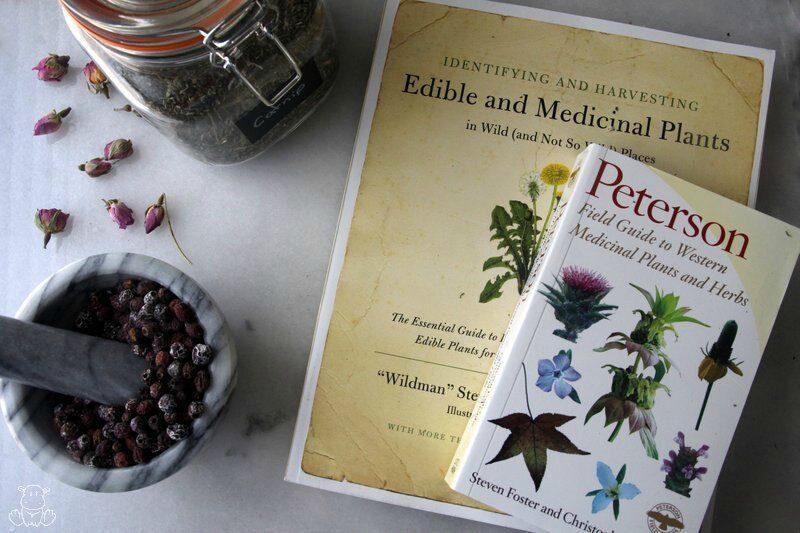 edible medicinal herb books