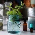 Lemon balm herb, tea, tincture and essential oil on a table