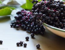 Does Elderberry Cause Cytokine Storms?
