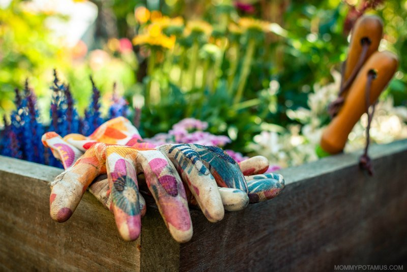 Gardening gloves and trowels