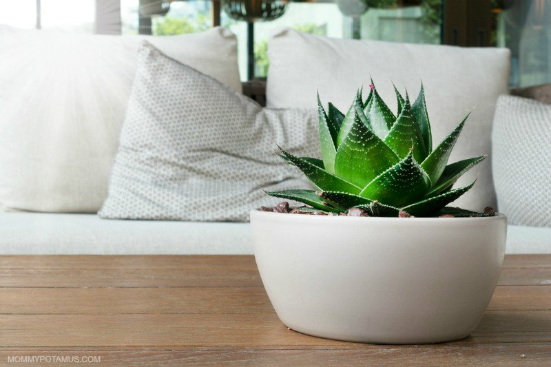 Living room with fresh plant and cozy couch