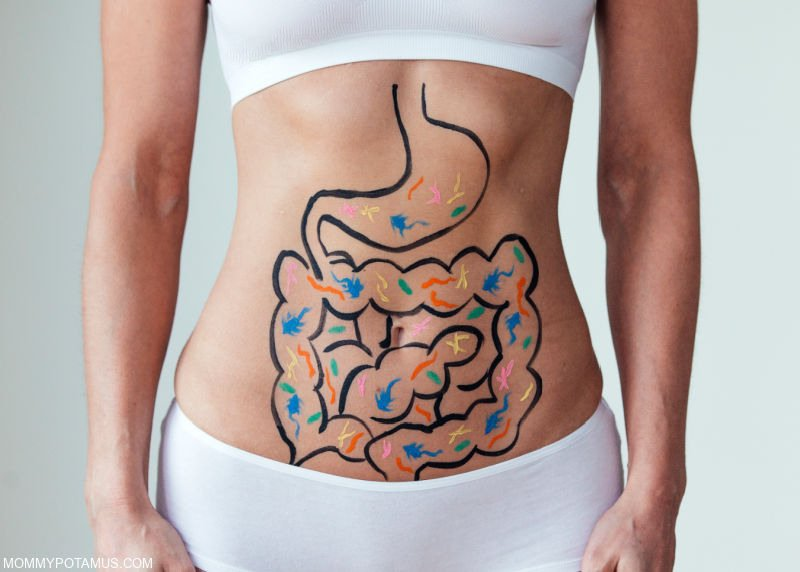 Woman with gastrointestinal tract and beneficial bacteria painted on her stomach